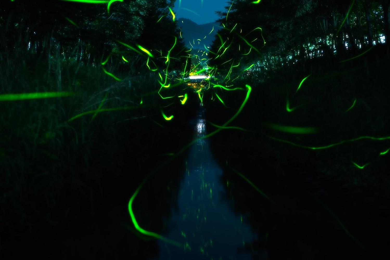 Firefly by Masataka Inada