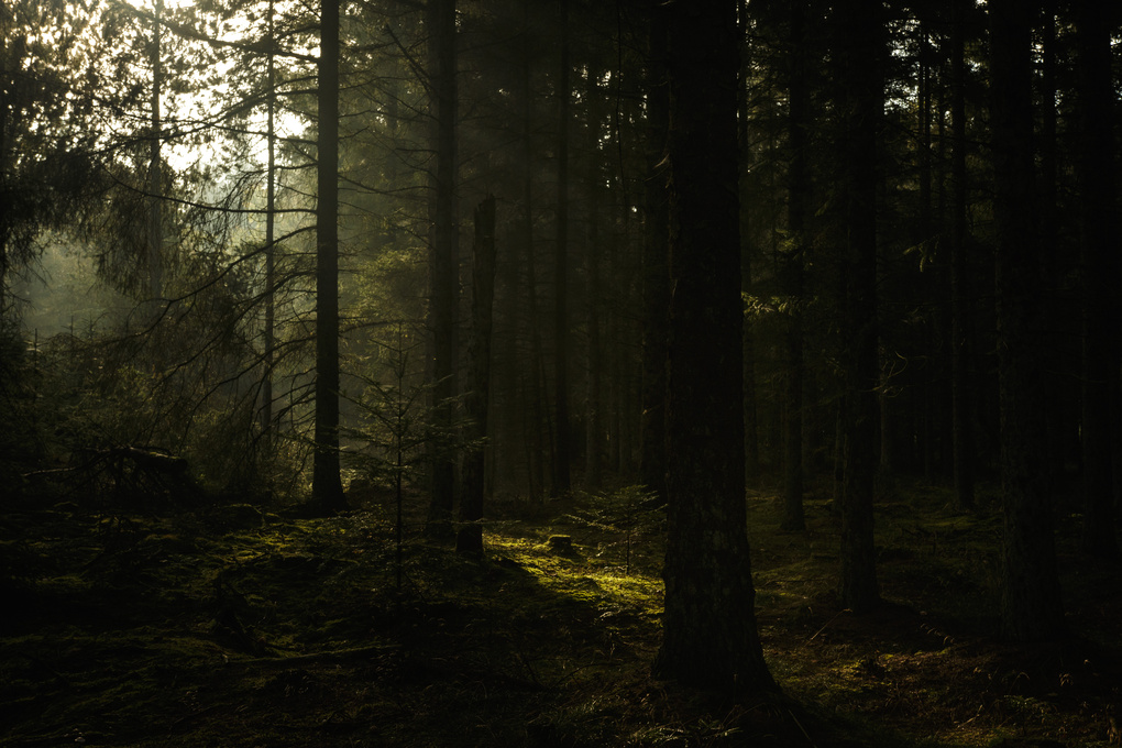 Exploring the Danish forest by Jeroen Cox