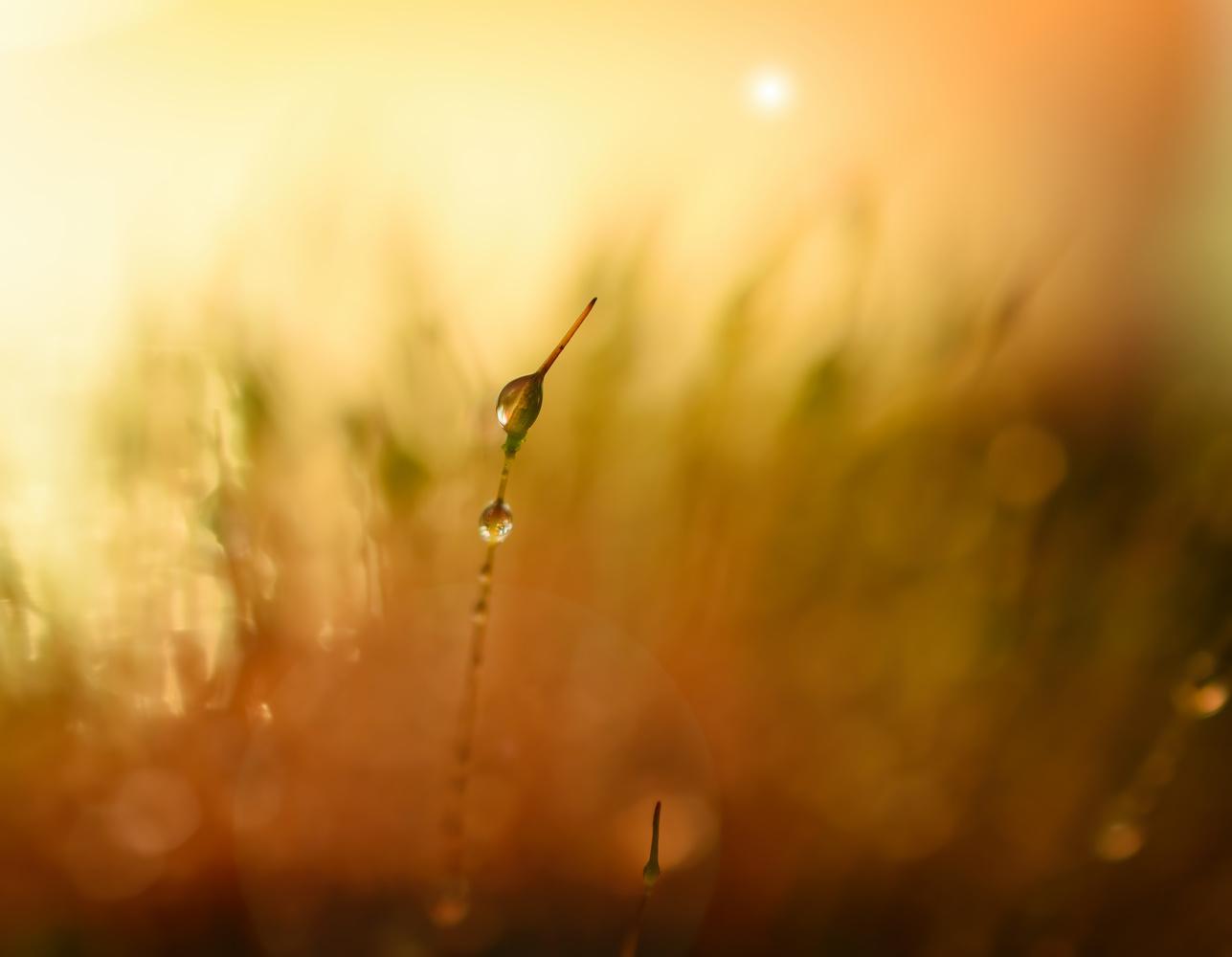 Make a wish by Sandra McCabe