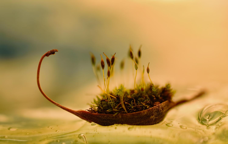 The Little Big Adventure by Sandra McCabe
