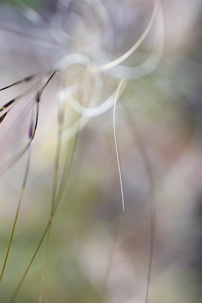 Swish by Sandra McCabe