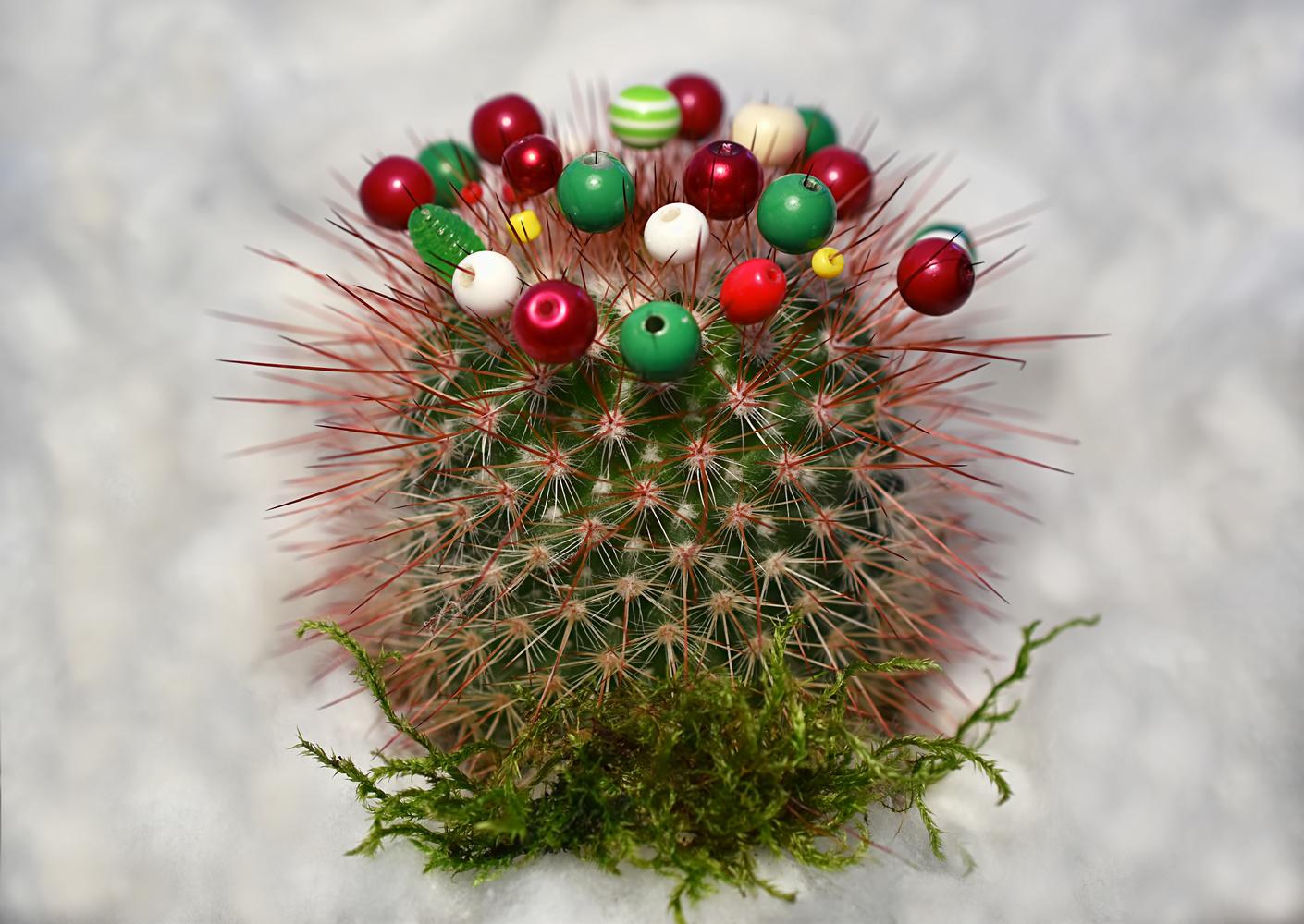 A thorny year by Sandra McCabe