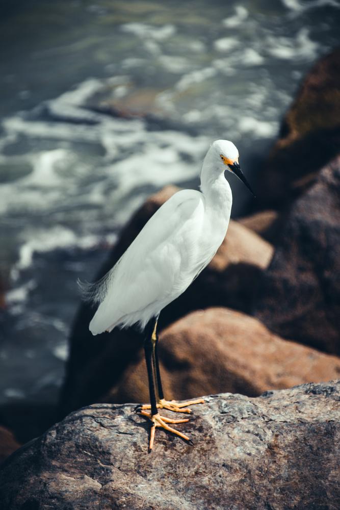 Heron by David Perman
