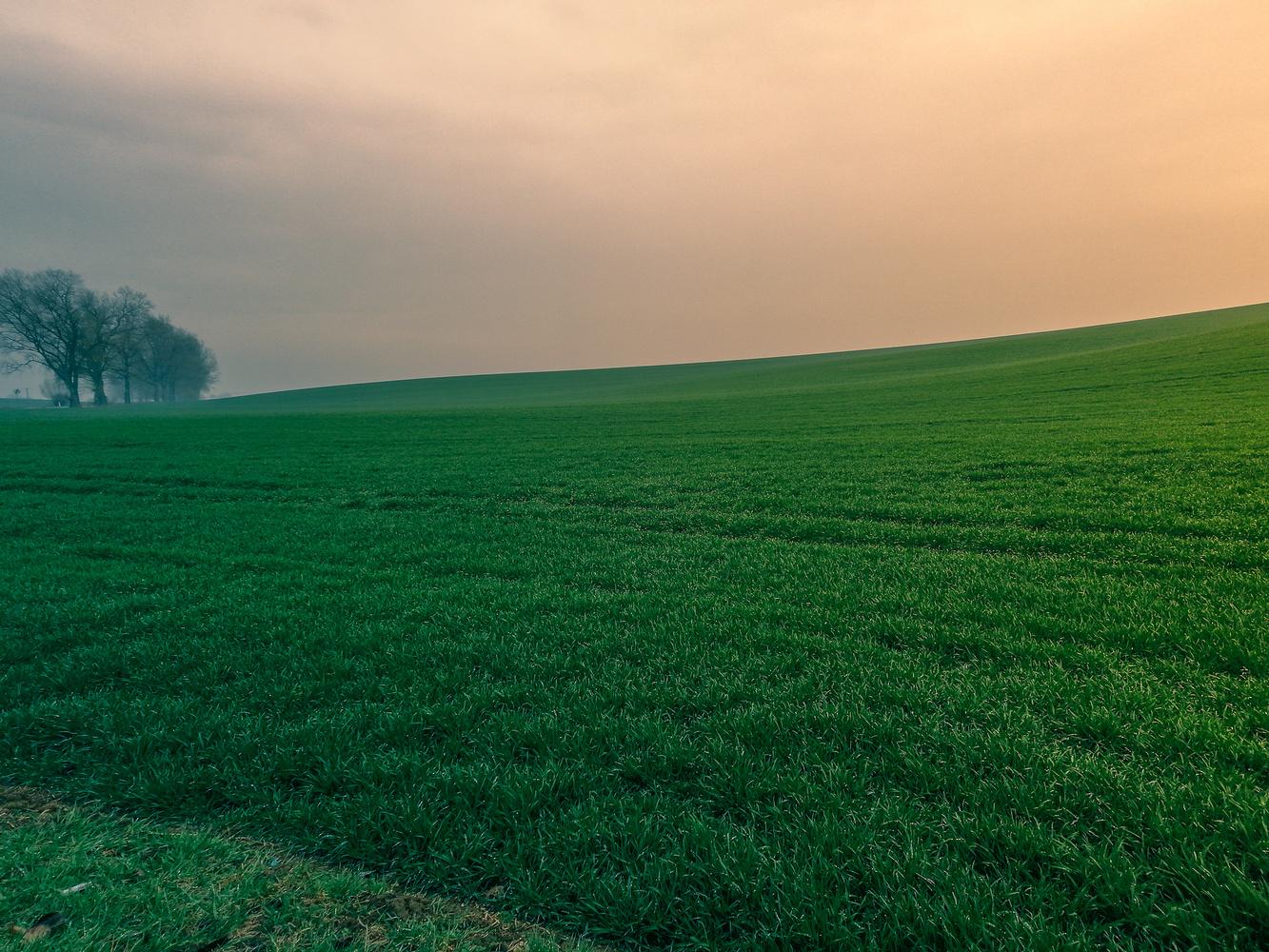 Alone trees by Rafał Miernik