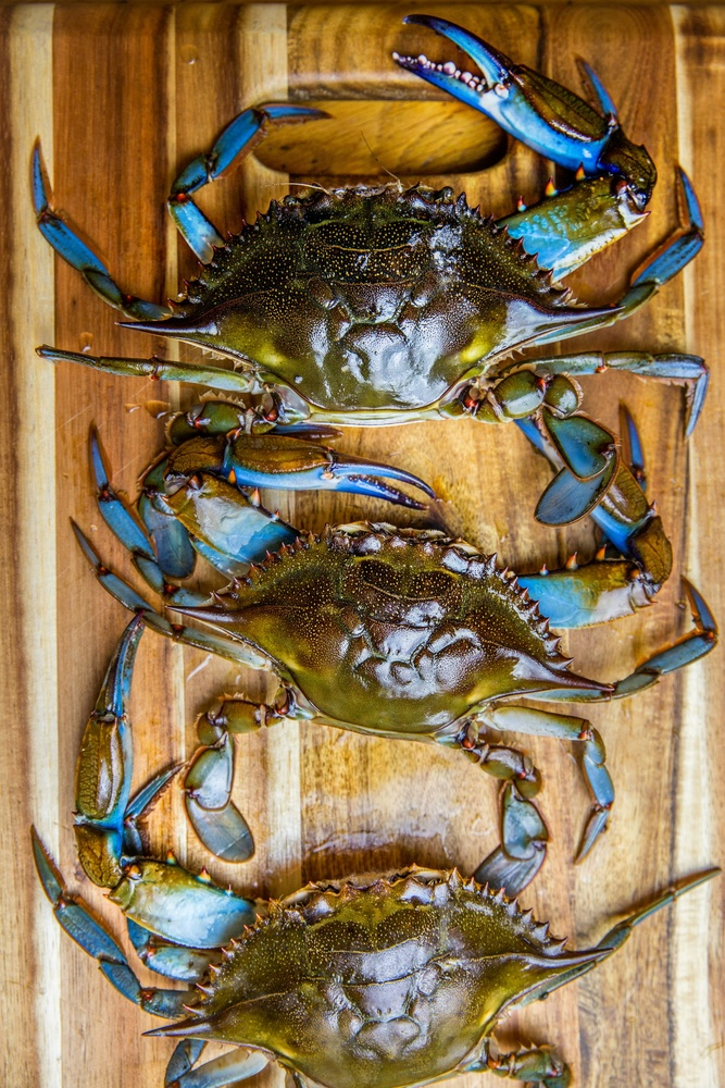 NC Blue Crabs by Stacey Sprenz