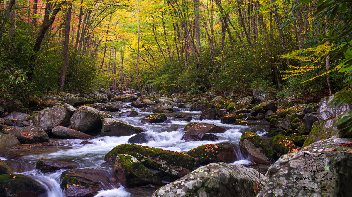 Autumn Creek by Gene Rollins