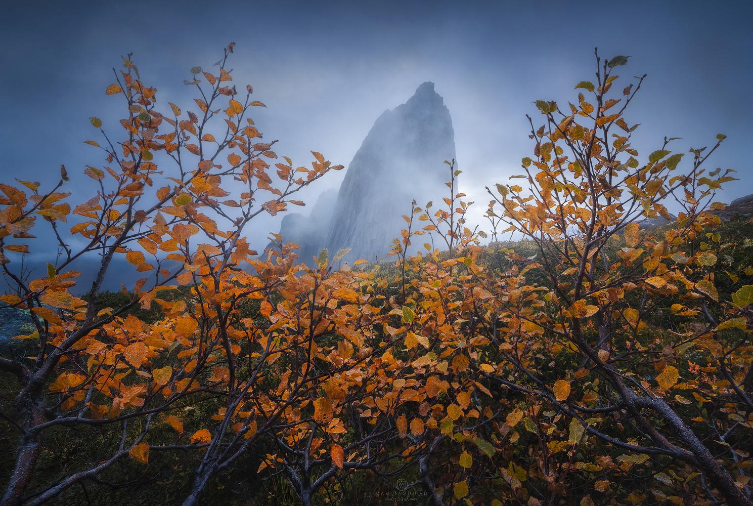 Misty Segla by David Aguilar