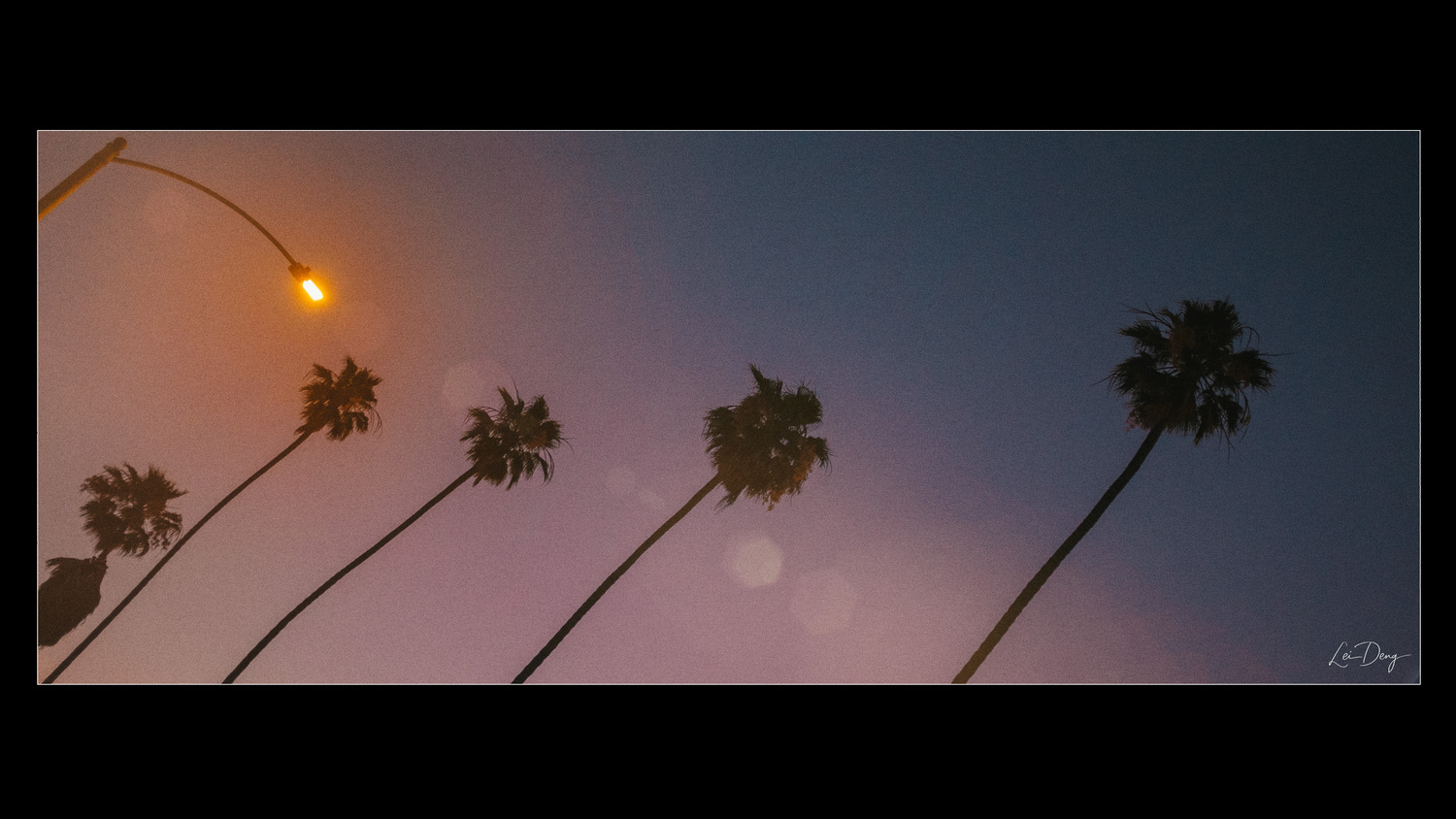 LA Palms by Lei Deng