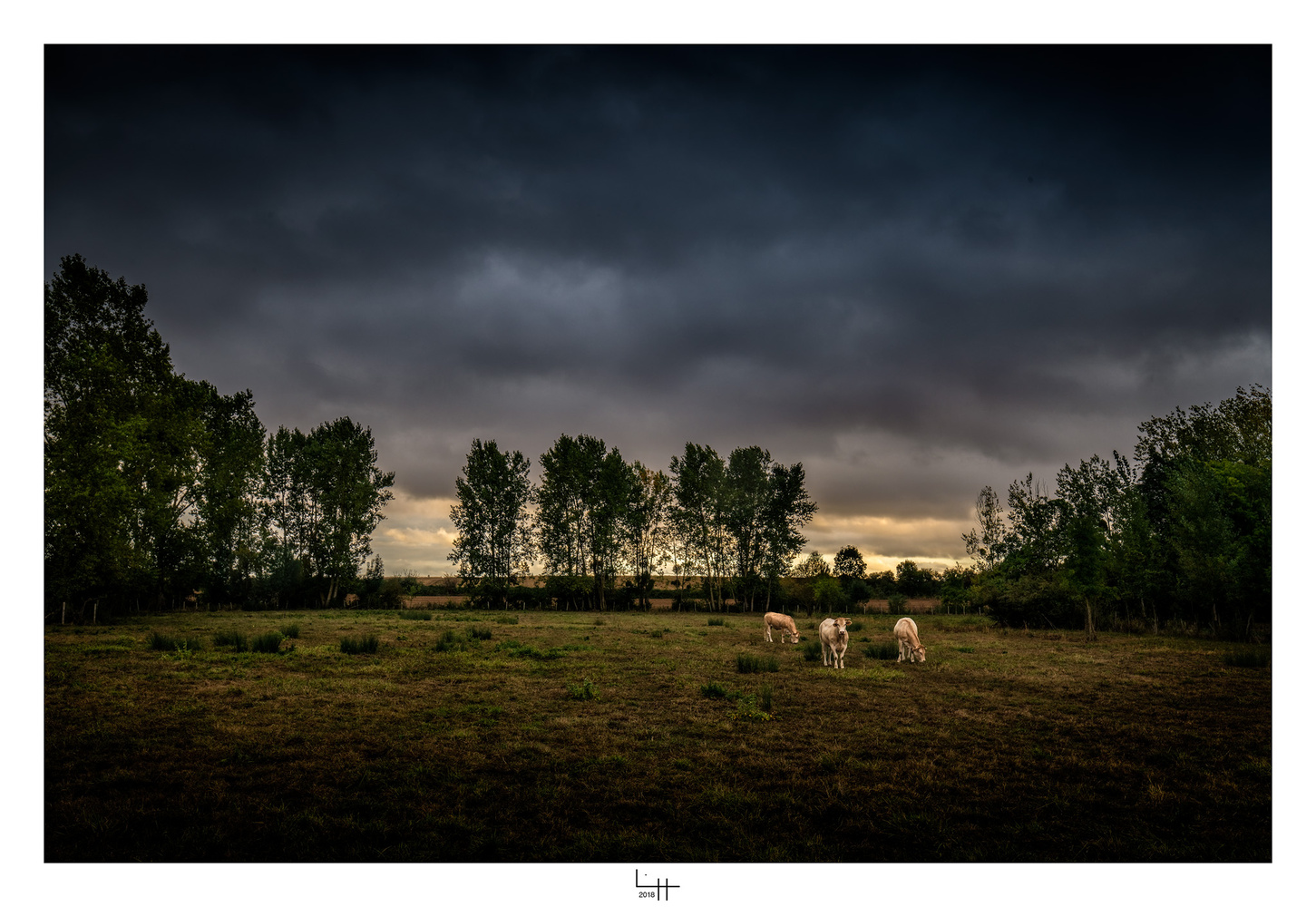 Trois Vaches by Lionel HUG