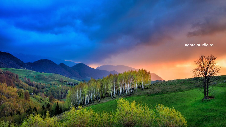 Birch trees in the morning by Paulian Prajitura