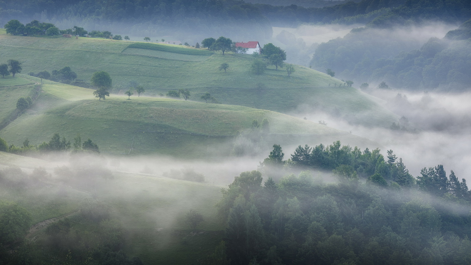 Foggy, moody morning by Paulian Prajitura