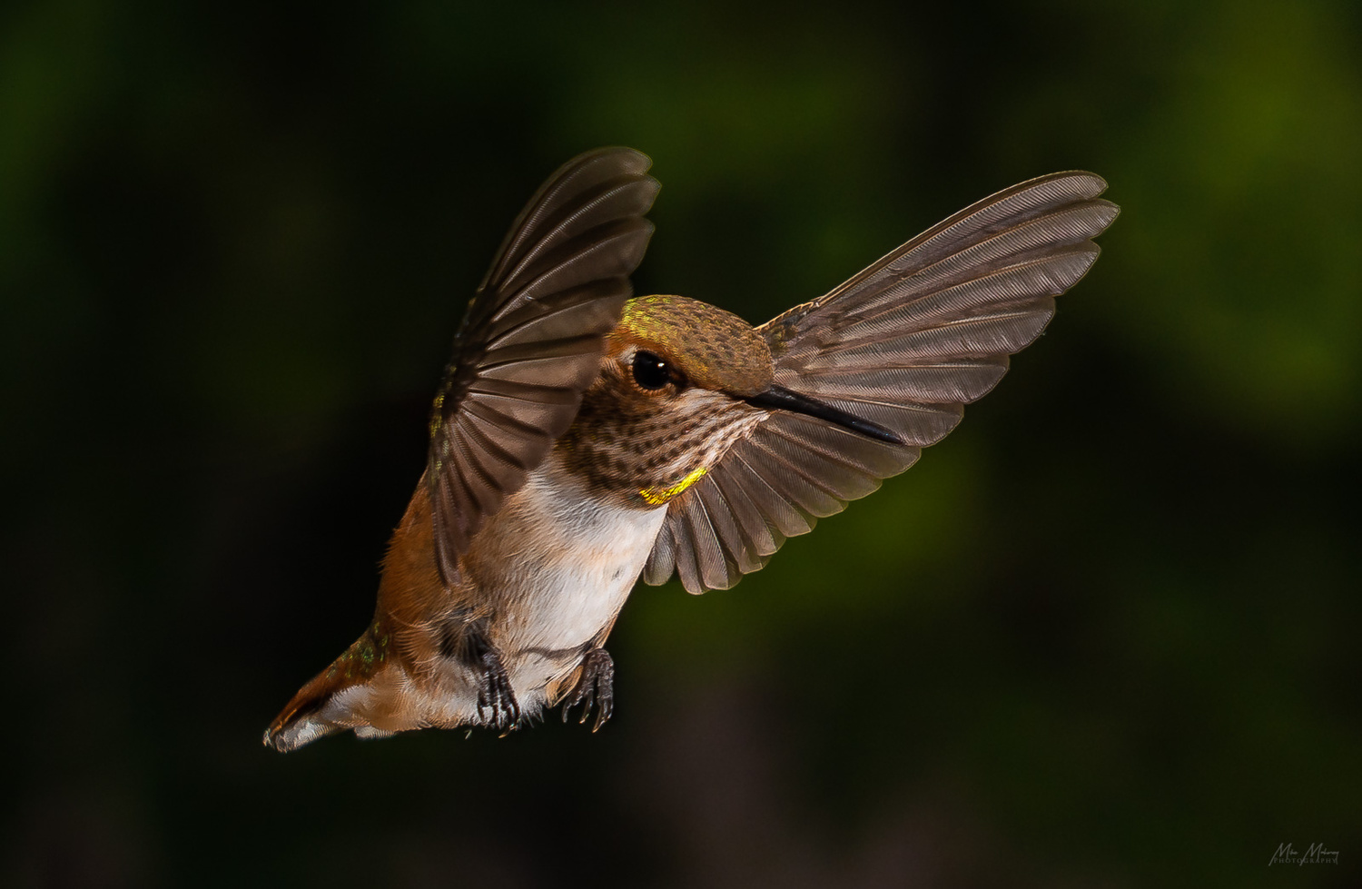 Hovering by Mike Mahoney