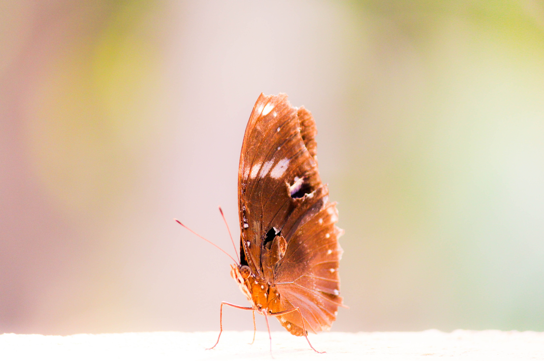 B fly by Avi Bhuyan