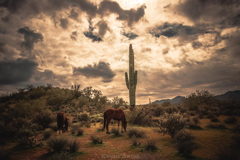 Storm graze by Kevin Antol