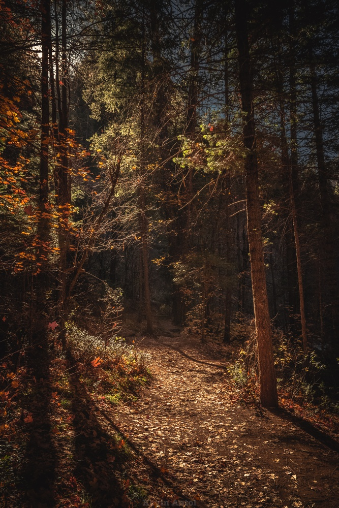 Into the fall by Kevin Antol