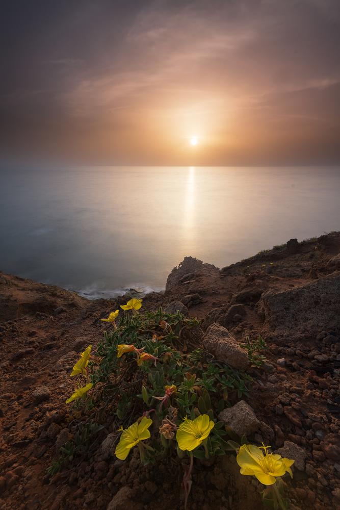 Primrose sunset by Idan Livni