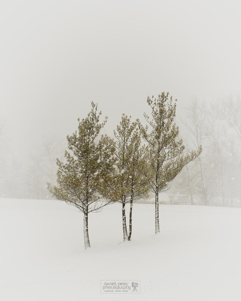Winter in Ohio by Daniel Frost