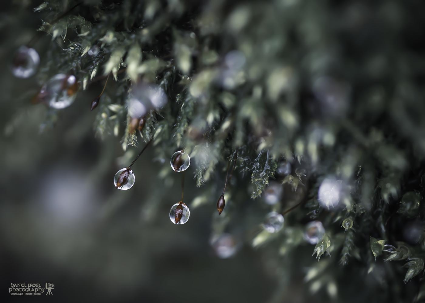 Macro Moss by Daniel Frost