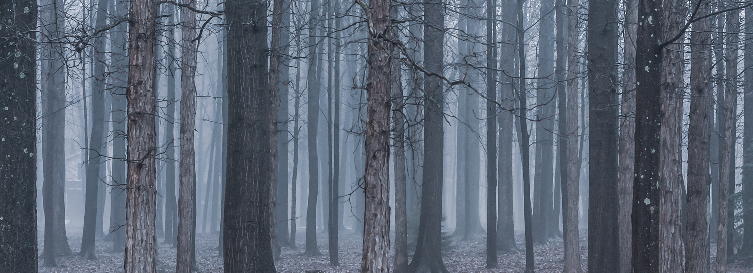 Foggy Forest Panoramic by Daniel Frost
