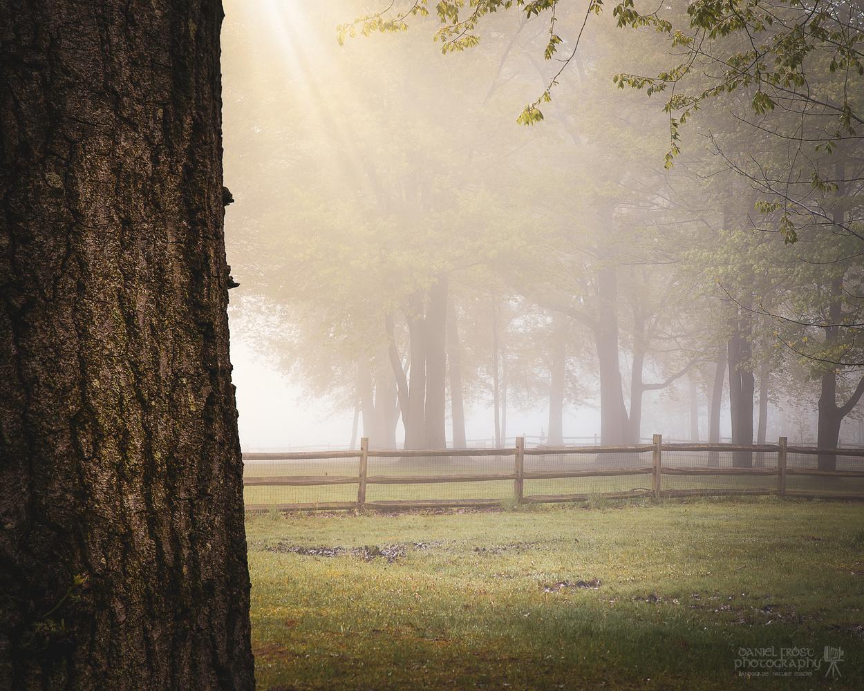 Foggy morning in Ohio by Daniel Frost