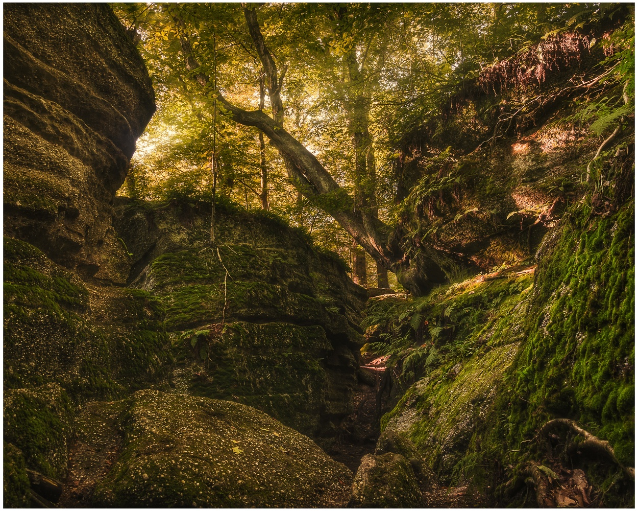 Nelson Kennedy Ledges State Park by Daniel Frost