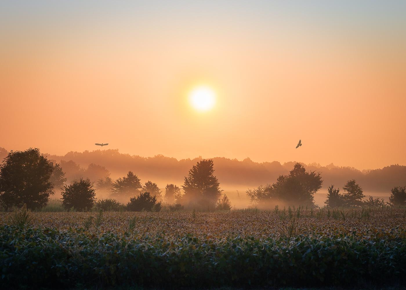 Soybean Sunrise by Daniel Frost