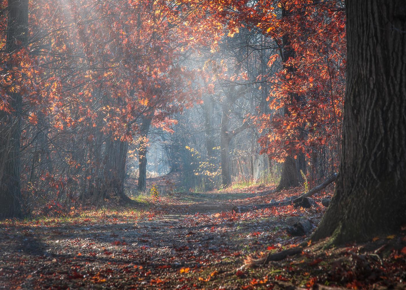 Autumn's end by Daniel Frost