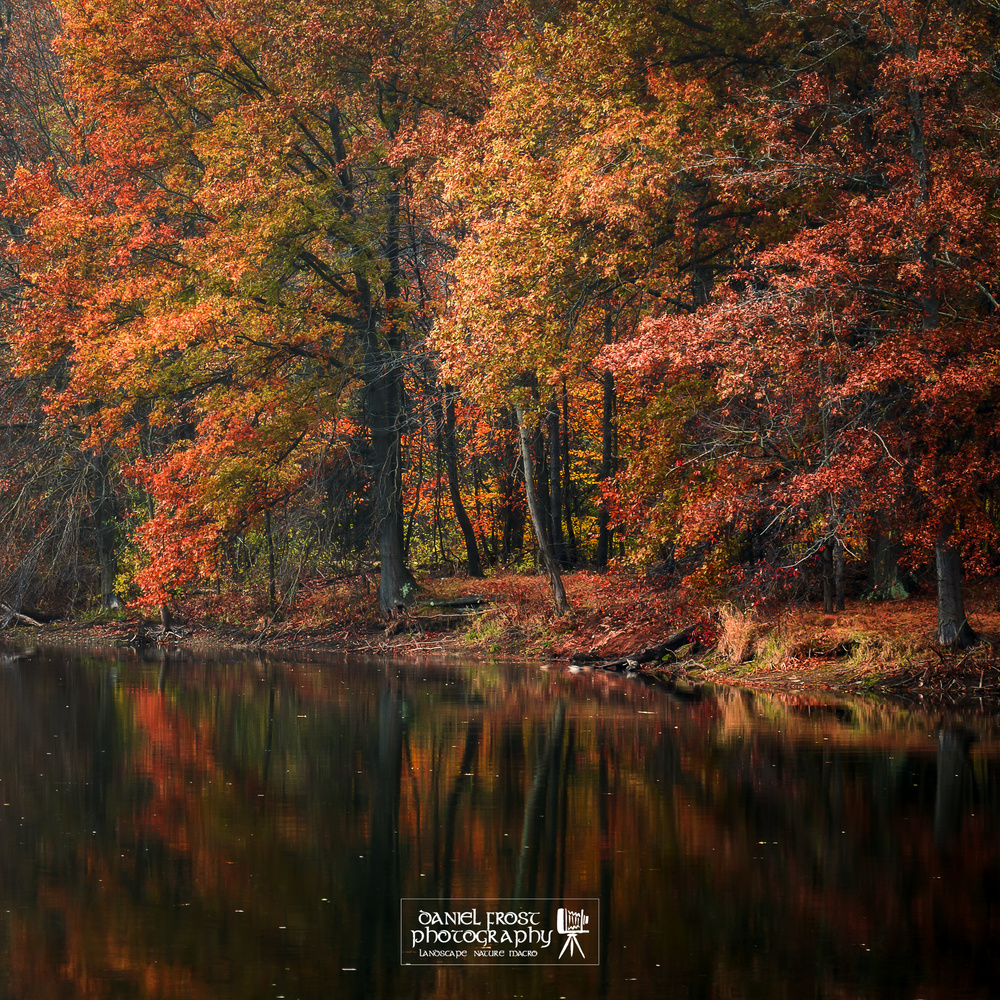 Mosquito Lake State Park in Autumn by Daniel Frost
