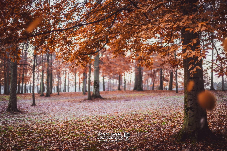 Beech Grove by Daniel Frost