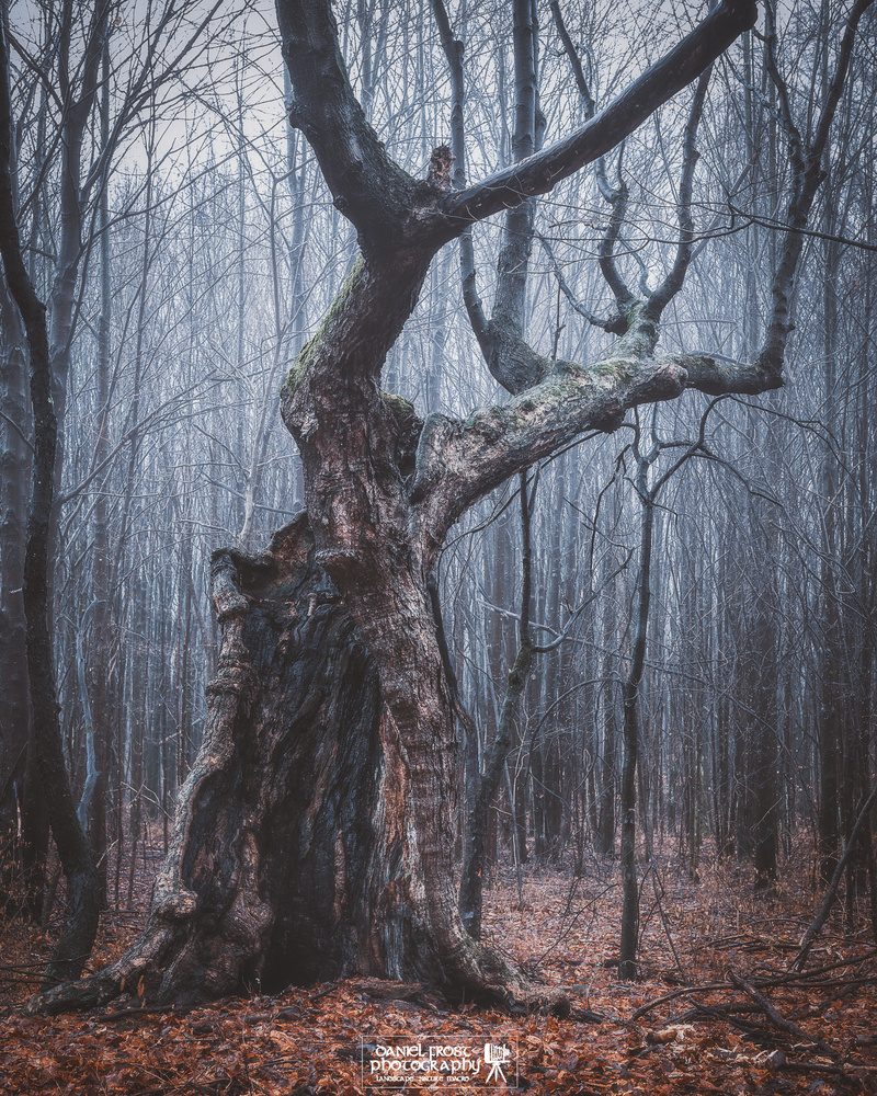 Old creepy tree by Daniel Frost