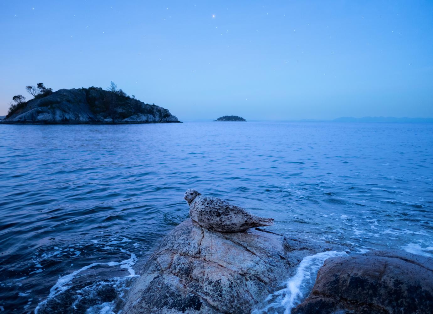 Blue Hour by Jaspreet Sidhu