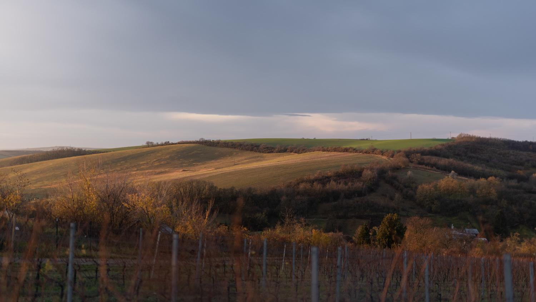 Identity - Gurdau Winery by Marek Dvorak