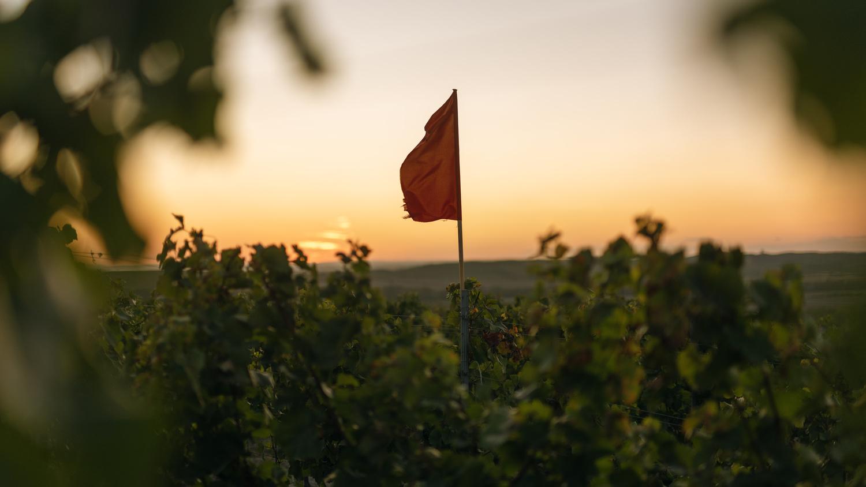 Plener Winery by Marek Dvorak