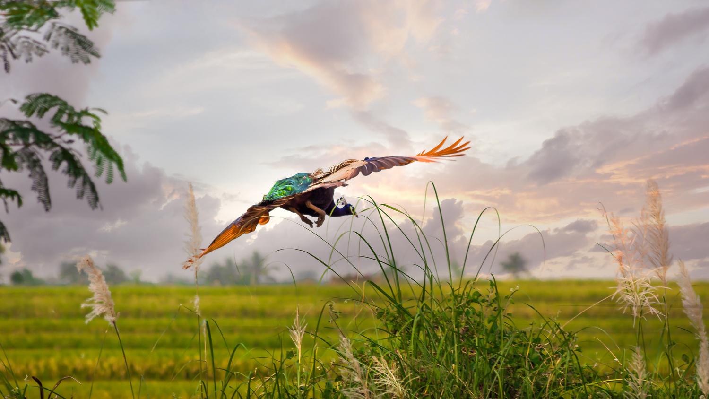 Flying Peacock by Raja Jinnah