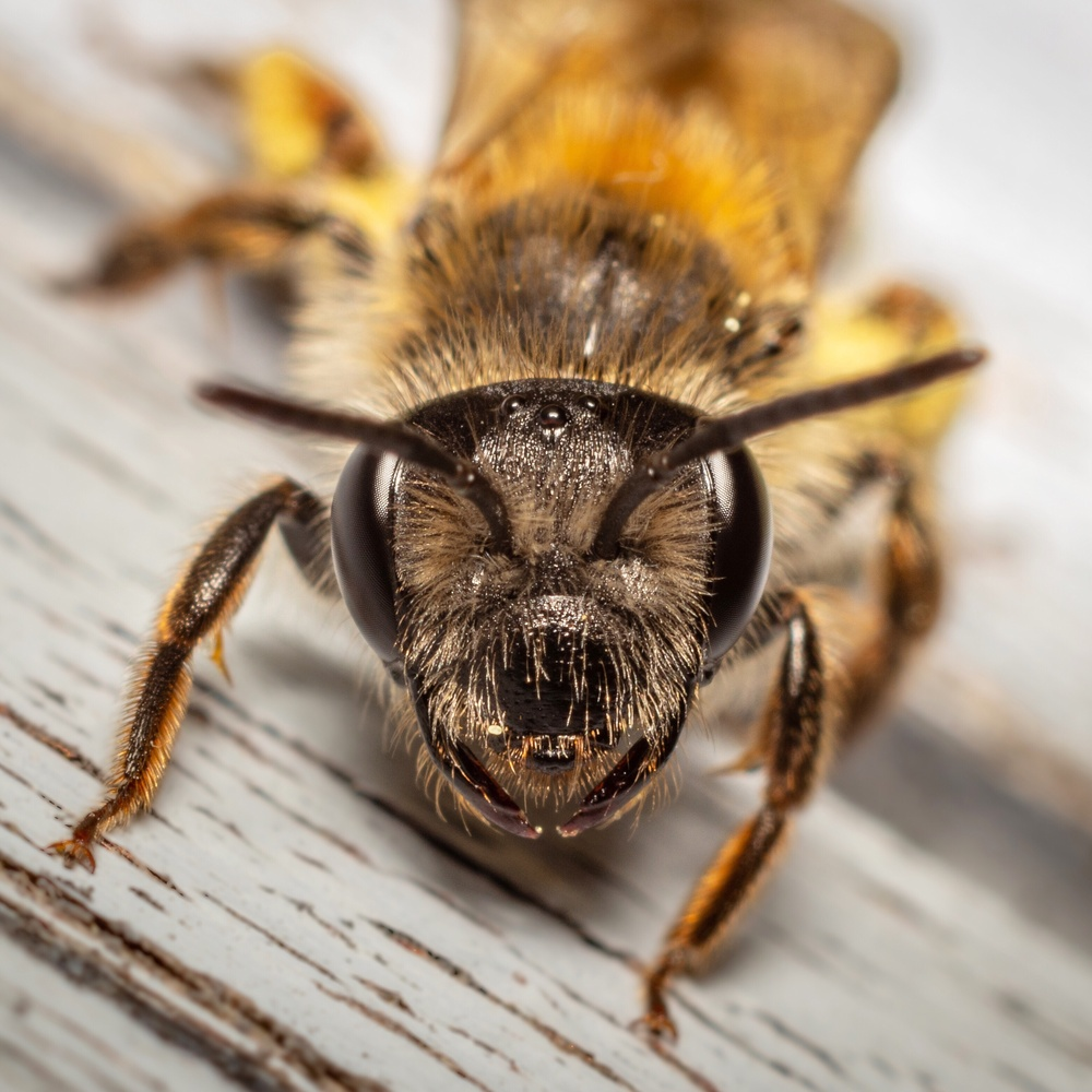 A bee by Benjamin Skalbjerg Lyngsø