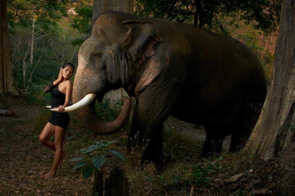 Nang Elephant by Dan Howell
