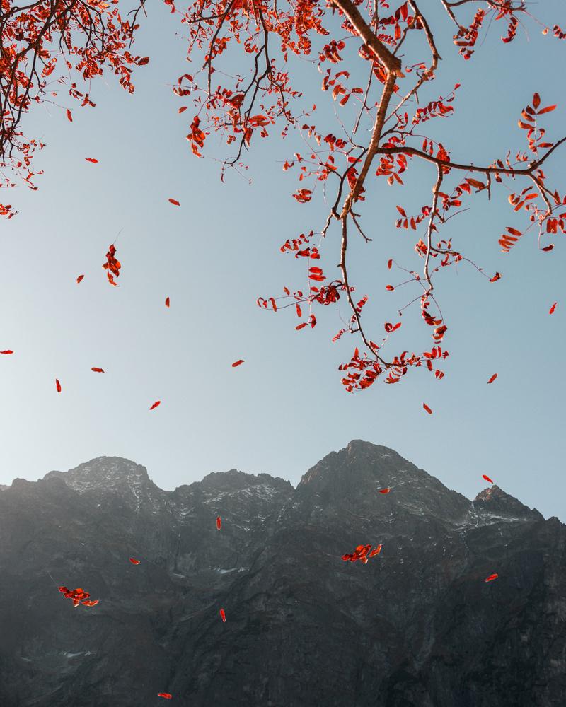 Leaves by Eryk Lewandowski