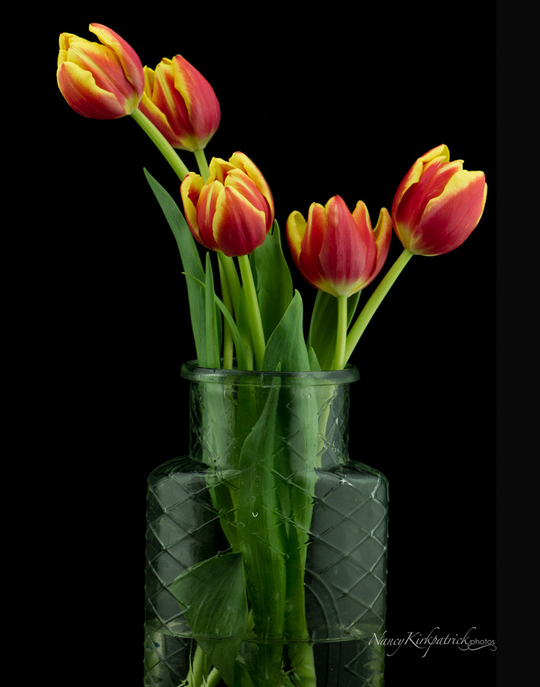 Tulips on Black by Nancy Kirkpatrick
