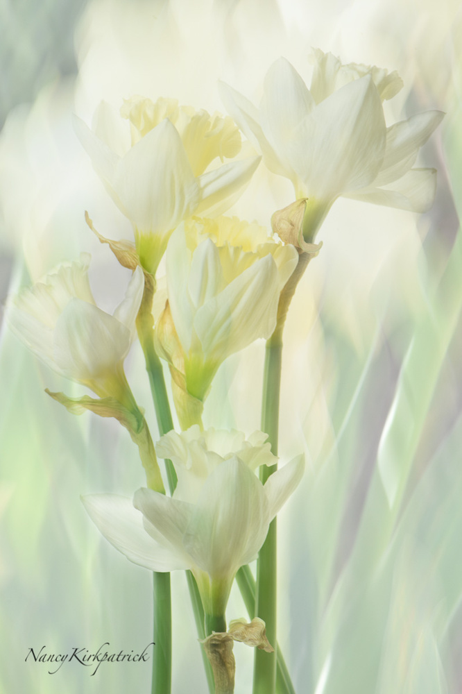 Narcissus and Stained Glass by Nancy Kirkpatrick
