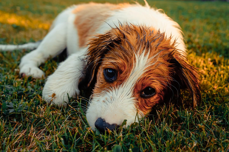 Puppy by Linus Zoepfgen