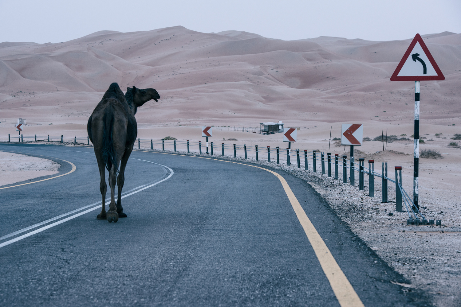 Humps Ahead by Rob Work
