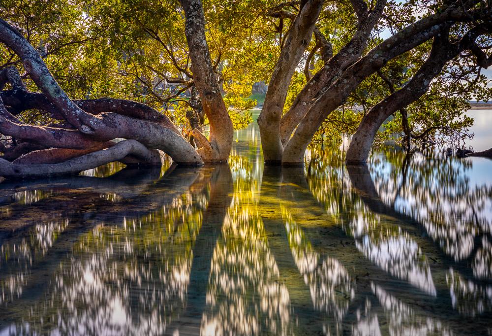 Moona Moona Creek by Michael Borisenko
