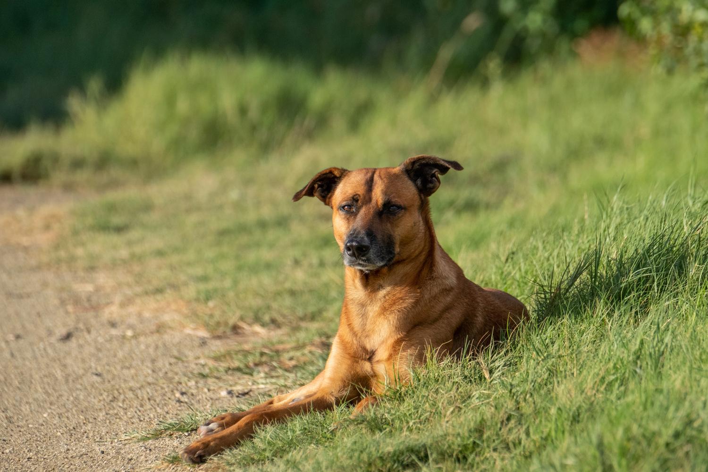 Wild Dog of Aruba by Mitchell Torjman