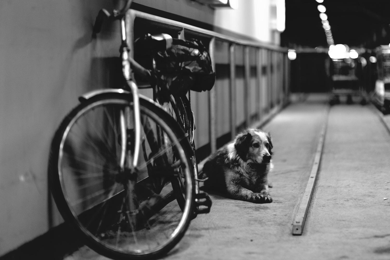 Dog by Sergey Koveshnikov