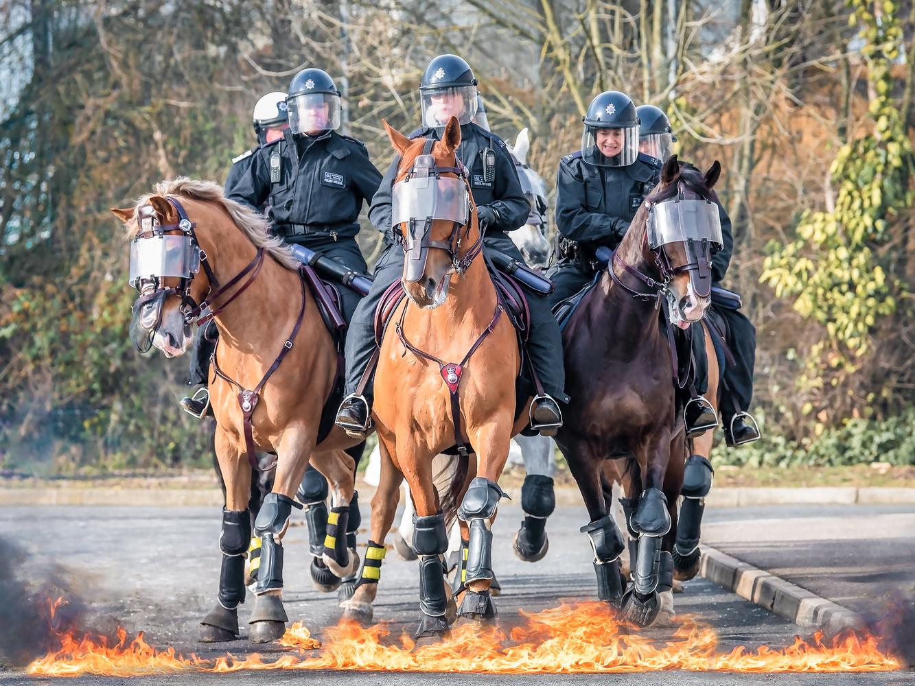 Police Horse & Rider Training by Richard Prestidge