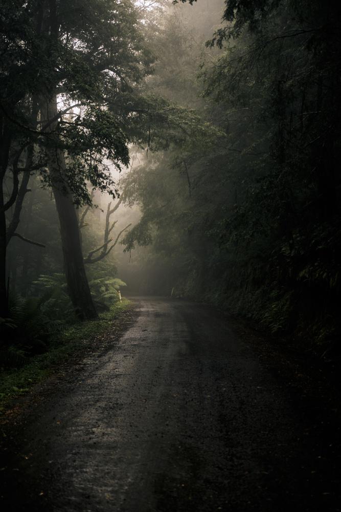 Misty by Haydn Dare