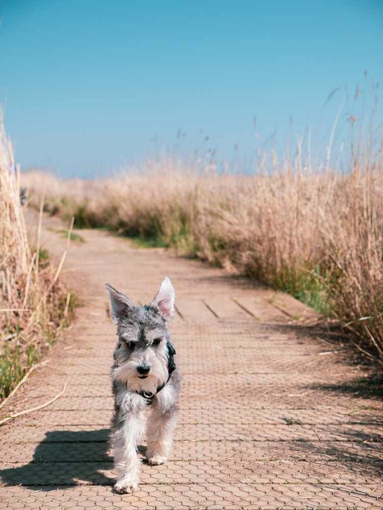 Southwold Easter Sun Puppy by James Nixon