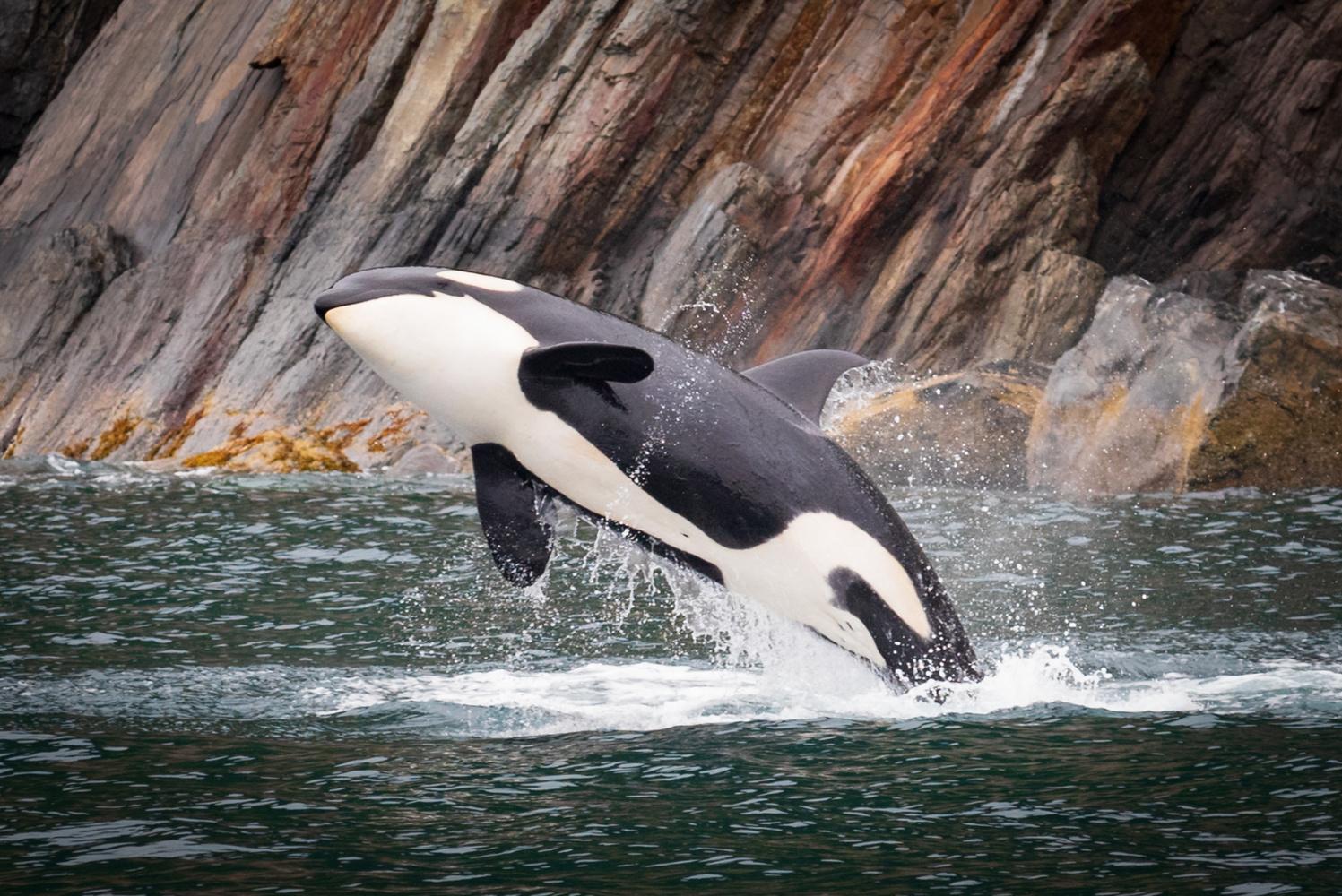 It's a whale by Roger Moffatt