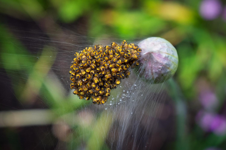 Spiders (not) from Mars by Roger Moffatt