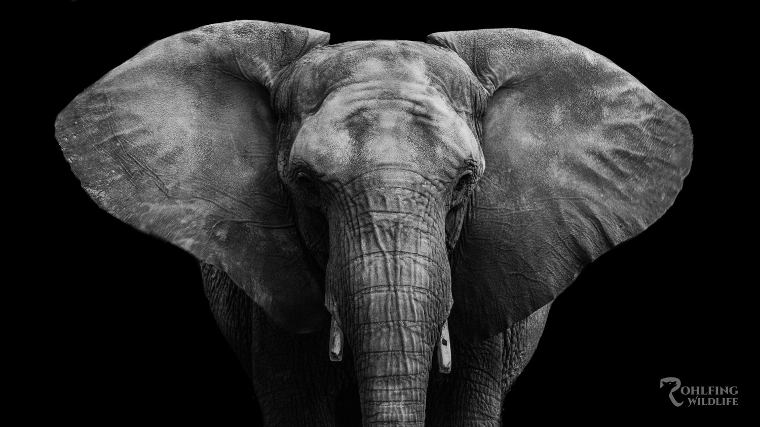African Elephant - Henry Doorly Zoo by Kyle Rohlfing